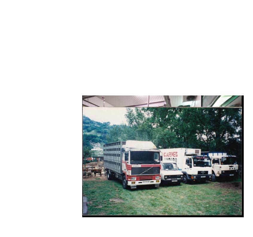 venta-de-corderos-1a